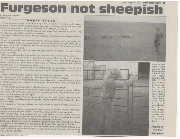 sheepfarming